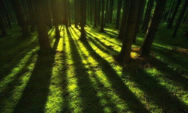 En 22-årig mand fra Varde er blevet idømt fængselsstraf for sexafpresning og krænkelser over for i alt 169 piger og unge kvinder. Han blev blandt andet dømt for at have voldtaget en 16-årig pige, som han tvang til at møde op i en skov i august 2018. Det skriver HovsaDeling.dk. Arkivfoto: Pixabay.